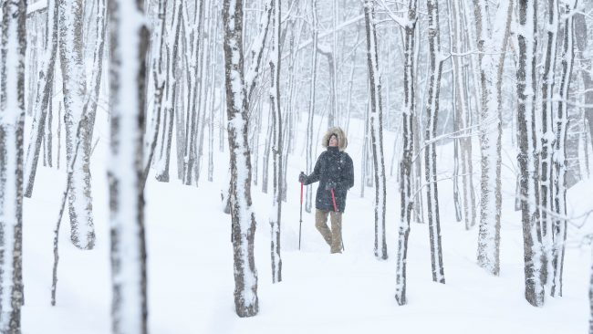 HIKE INTO SNOWY FOREST